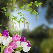 Tulip flowers and birch — Stock Photo