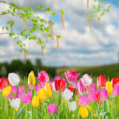 Spring landscape with tulip — Stockfoto