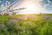 Landscape with flower meadow — Stock Photo