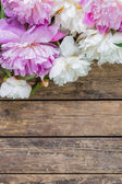 Peony on rustic background — Stock Photo