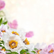 Floral background — Stock Photo #48107183