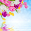 Floral background — Stock Photo #48107193