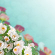 Floral background — Stock Photo #48107231