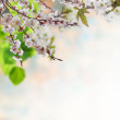 Floral background — Stock Photo #48107279