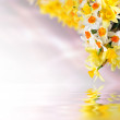 Floral background — Stock Photo #48107317