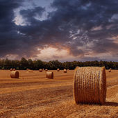 The sloping wheat field — Stock Photo
