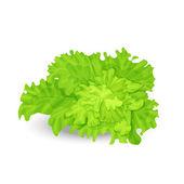 Green salad — Stock Vector