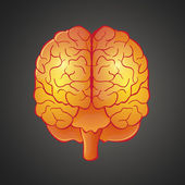 Graphic illustration of Brain — Stock Vector