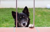 Dog looks through a window — Stock Photo