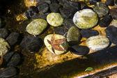 Su birikintisi içinde sonbahar yaprak — Stok fotoğraf