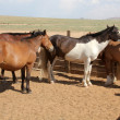 Stock Photo: Animal husbandry on Mongoligrasslands