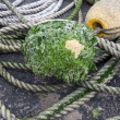 Buoy with rope — Foto Stock