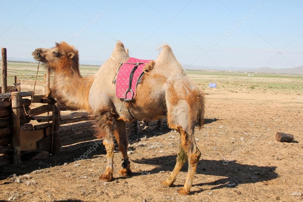 蒙古草原畜牧业 — 图库照片08kaowenhua#18230749