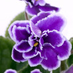 Violet room — Stock Photo #5293395