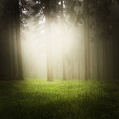 Dreamy forest — Stock Photo