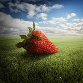 Big strawberry on the field — Stock Photo