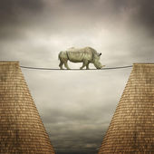 Rhino balanced on the line — Stock Photo