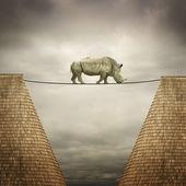 Rhino balanserade på linjen — Stockfoto