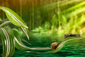 Snail on leaves above the water — Stock Photo