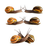 Meeting of two snails — Stock Photo