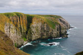Bird Cliffs in Newfoundland — Stock Photo