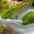 Moss and Leaves in a Mountain Stream — Stock Photo