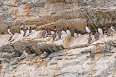 Seabirds on a Nesting Island — Stock Photo
