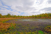 Wetland Bog in the Midwest — Stock Photo