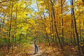Reading the Map on fall colors hike — Fotografia Stock