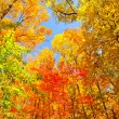 Fall Colors on a Midwest Trail — Stock Photo
