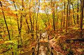 Trail in i hösten skogen — Stockfoto