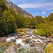 Mountain Stream in the Wilderness — Stock Photo