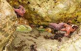 潮プールで海の生活 — ストック写真