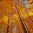 Fall colors in the shade of the forest - Stock Photo