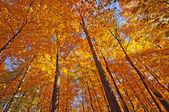 在森林的树荫下秋天颜色 — 图库照片