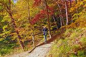 Bird watcher on a fall forest quest — Stock Photo
