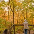 Enjoying the colors of fall in the Forest - Foto Stock