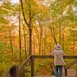 Enjoying the colors of fall in the Forest - Stock Photo