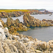 Jagged Rocks on Newfoundland Coast — Stock Photo #18945695