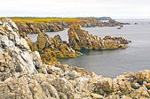 Jagged Rocks on the Newfoundland Coast — Стоковое фото