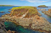 Bird nesting island on the Atlantic Coast — Stock Photo