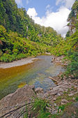 Quiet River Through a Sub-Tropical Forest — Stock Photo
