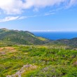 Trail to Wilderness Coast — Stock Photo #21543039