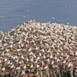 Sea Birds on a Nesting Island — Stock Photo