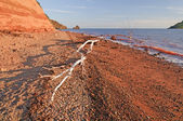 White Logs on a Red Beach at sunset — Stock Photo