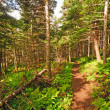 Trail Through Coastal Forest — Stock Photo #23546375