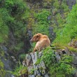 Stock Photo: Young Bear Resting in Wilds