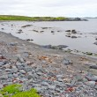 Rocky Beach on a Barren Coast in Newfoundland — Stock Photo