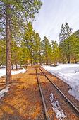 železniční vlečka do sníh a stromy — Stock fotografie