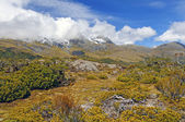 Alpine Vegetation below cloud shrouded peaks — Stock Photo